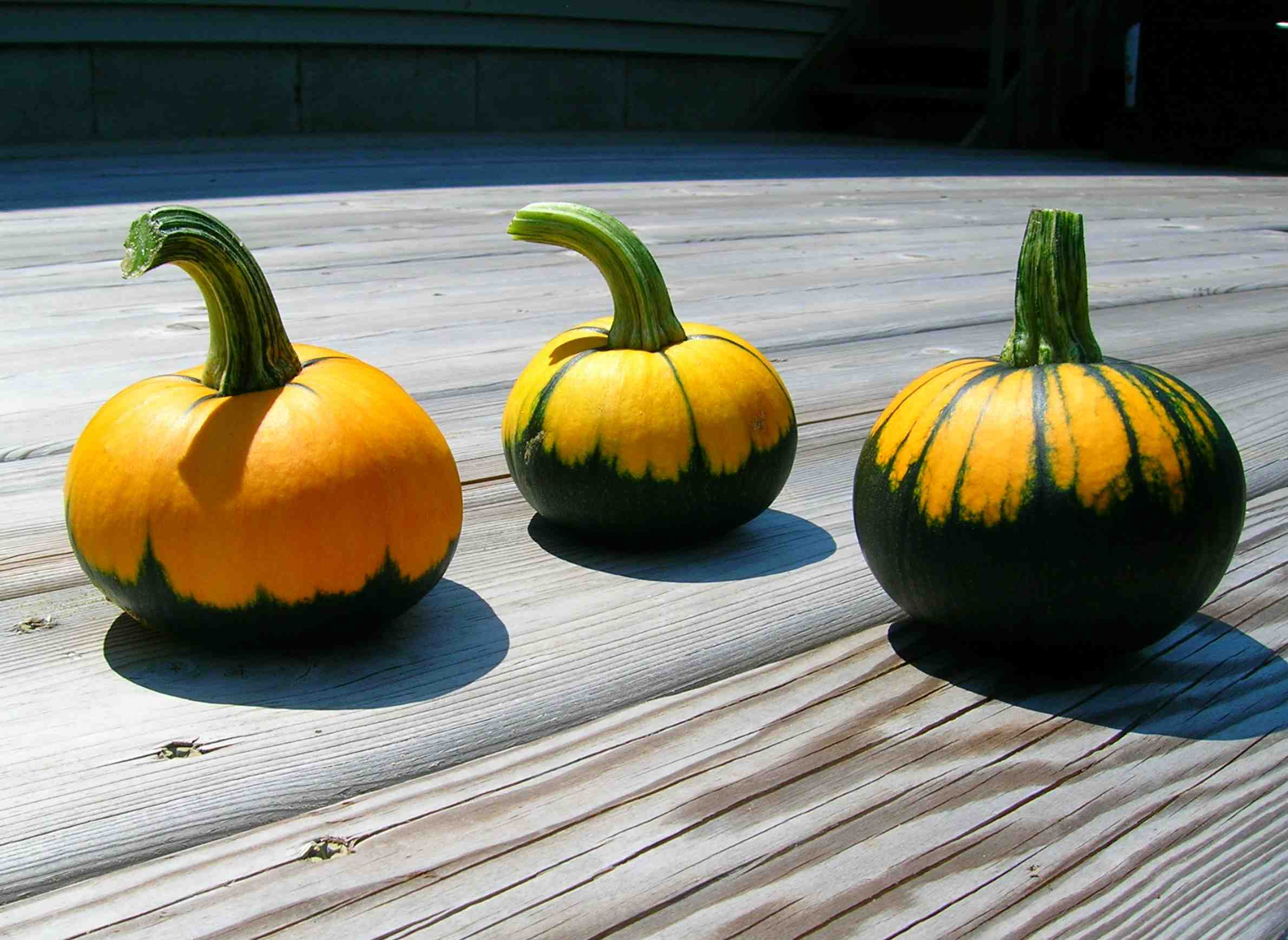 gardening-autumn-harvest-produce-pumpkins.jpg