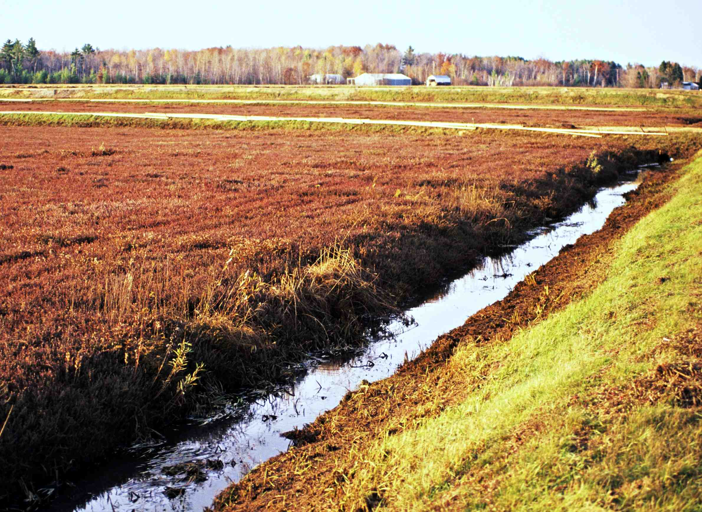 wpr-thewestside-cranberries-field-ditch.jpeg